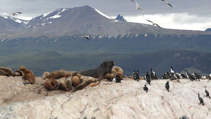 Ushuaia, explorando a cidade do fim do mundo