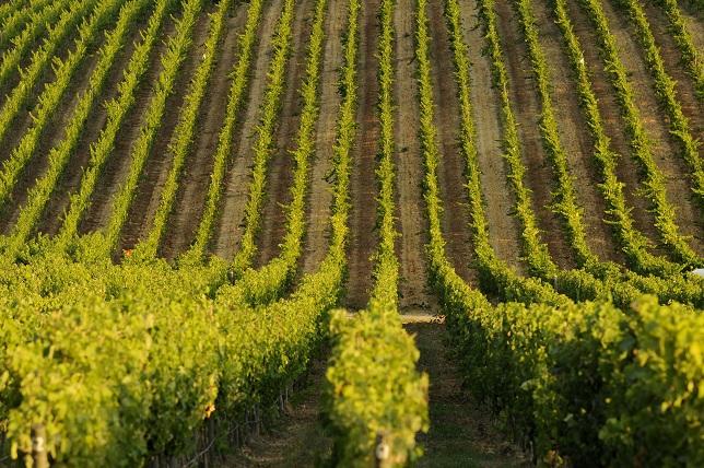 Vinícola Matetic – Uma maneira diferente de conhecer os vinhedos do Chile