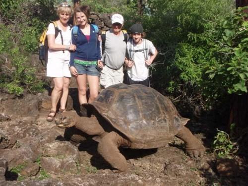 A famosa tartaruga de Galápagos