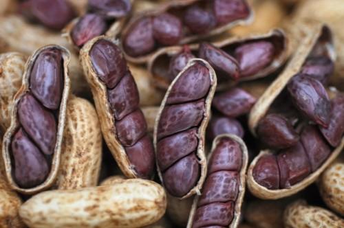 Amendoim - Foto: Cesar de Oliveira. Acervo EMSETUR